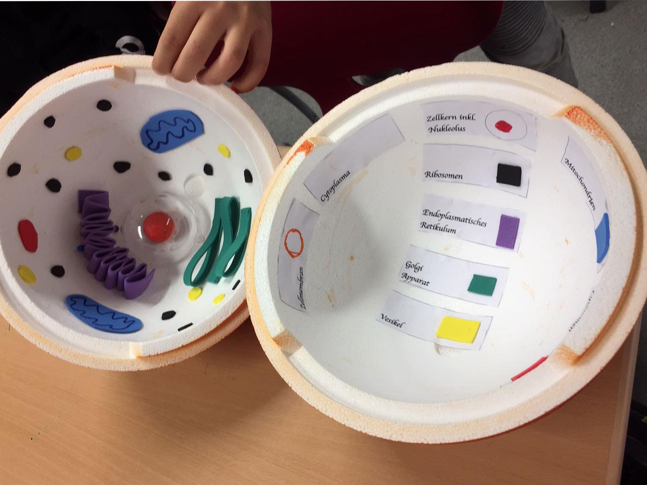 Schüler Basteln Modelle Von Zellen
